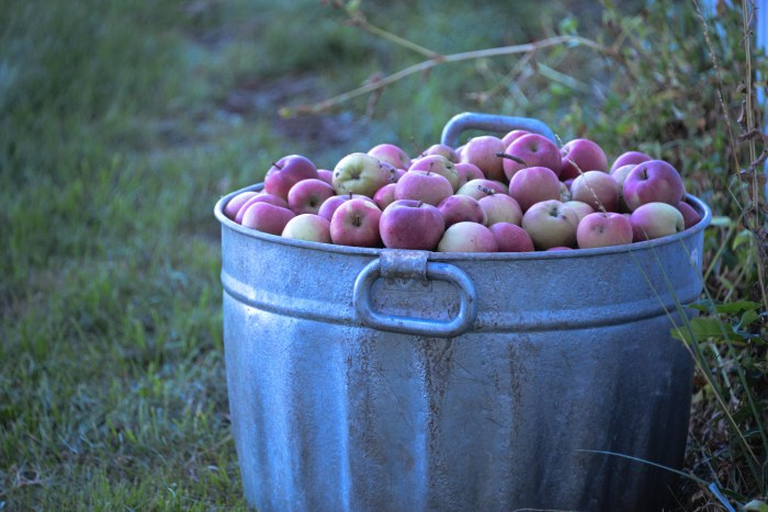 apple cider-1-4