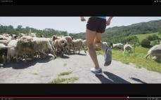 Altra CA sheep